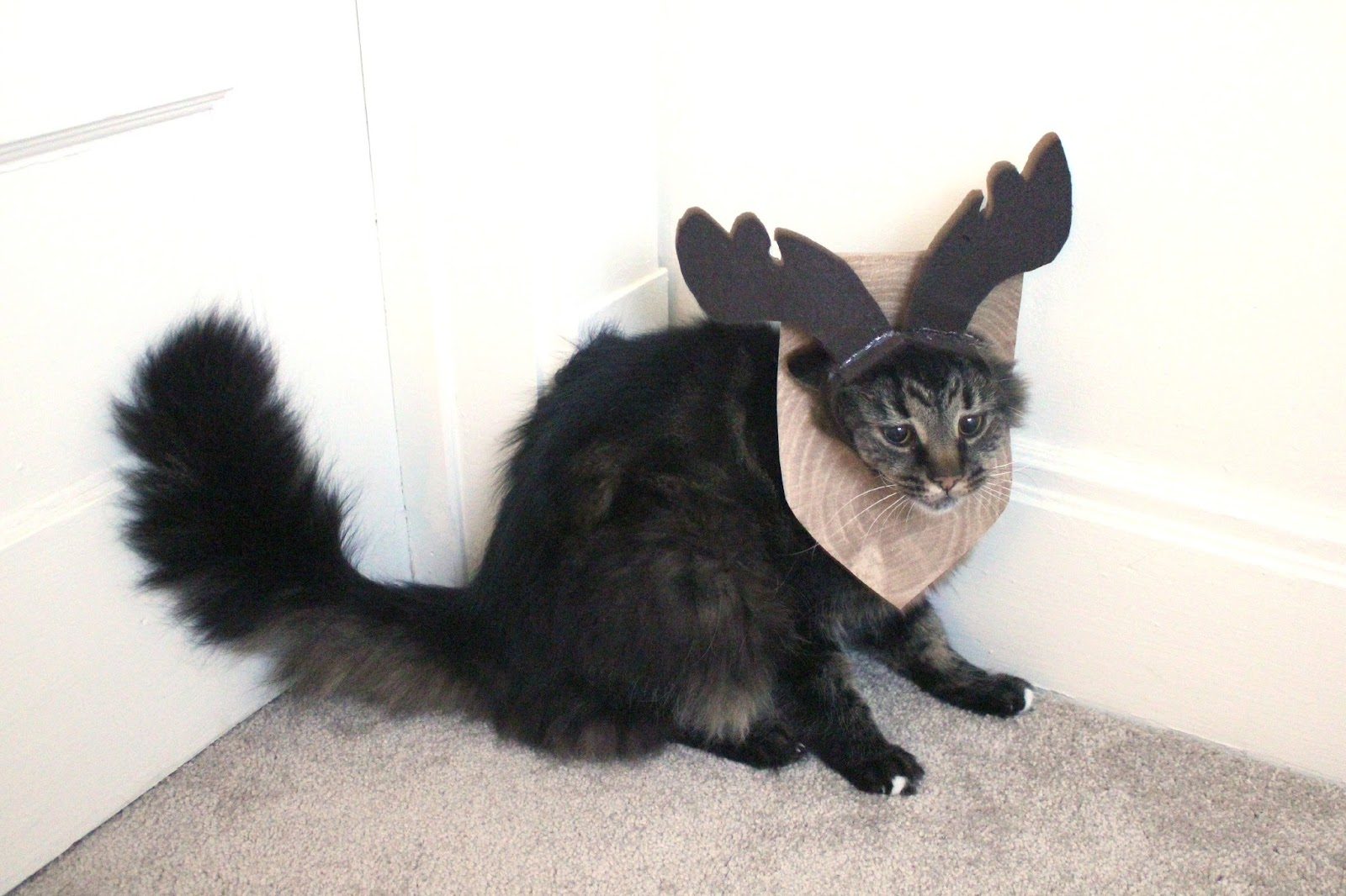 http://blogs.perl.org/users/byterock/The%20Incredible%20Mounted%20Cat%20Moose%20Costume%2019.jpg