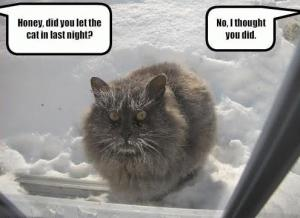 POOR KITTY IN THE SNOW.JPG
