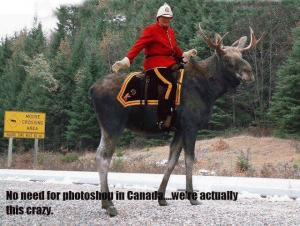 f812e335279fd3ef3d29a746d7fde802--meanwhile-in-canada-canadian-things.jpg