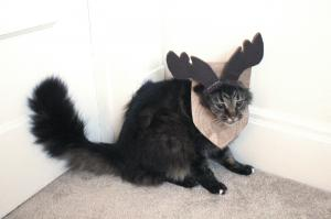 The Incredible Mounted Cat Moose Costume 19.jpg