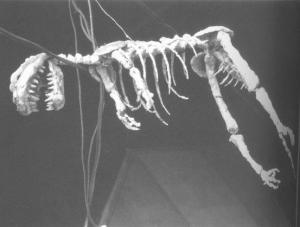 G54_-_Skeleton_prop_used_at_the_end_of_the_film.jpg