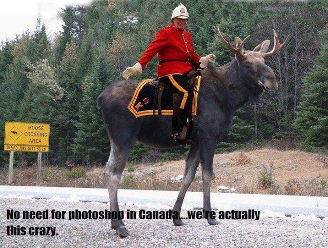 http://blogs.perl.org/users/byterock/f812e335279fd3ef3d29a746d7fde802--meanwhile-in-canada-canadian-things.jpg