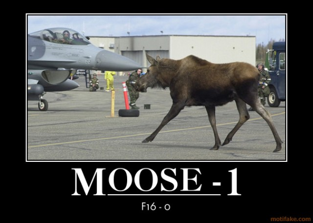 moose-1-nobody-moved-demotivational-poster-1284056678.jpg