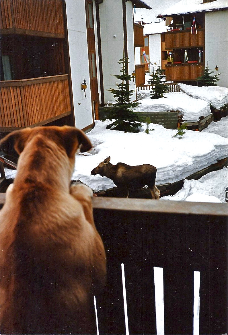 http://blogs.perl.org/users/byterock/moose-and-dog.jpg