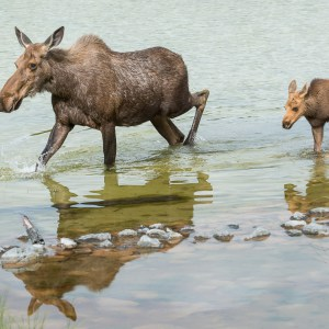 http://blogs.perl.org/users/byterock/moose-kananaskis-7.jpg